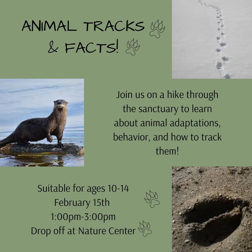 ridges-animal-tracks-and-facts