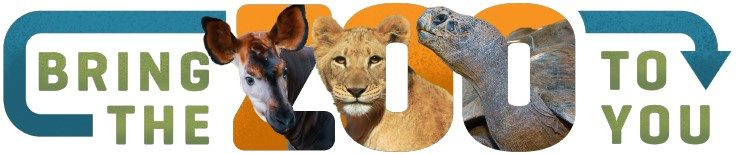 bring-zoo-to-you