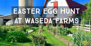 easter-egg-waseda-farms